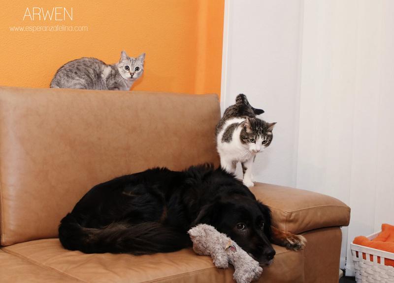 ARWEN, busca hogar (Alava) (fecha de nacimiento aprox: 01/08/2008) Arwen_11