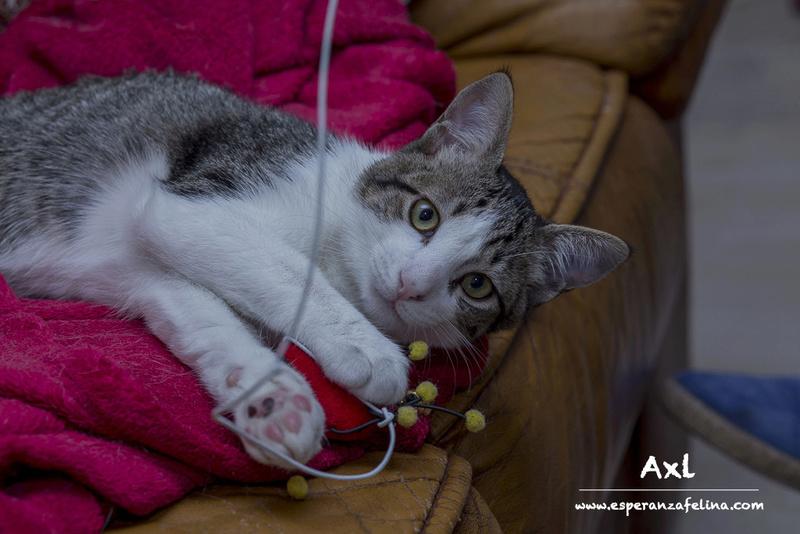 Axl Rose, parejita adorable busca hogar (Alava) (fec. nac. 14/07/2017) Axl210