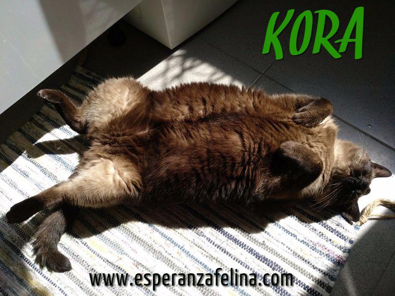 Kora, gata siamesa busca hogar, Álava (Fecha aprox. nacimiento 5/11) - Página 3 Bdpb5l10