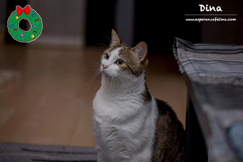 Dina, preciosa gata busca su hogar (Álava, fecha de nacimiento aproximada 10/04/2014 ) Bt7b3y10