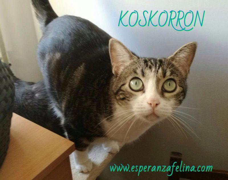 Koskorron, peluche en adopción +INMUNO ( Alava) ( F.N.aprox. 01/15) Cavuk010