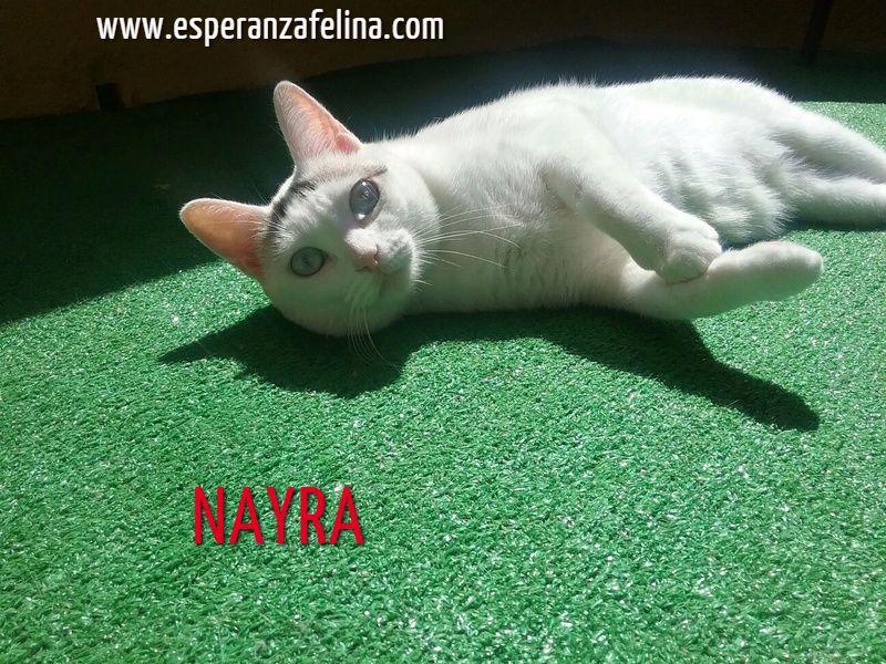 Nayra, gatita de ojos cautivadores en adopción. Alava (Fecha Nac. aprox: 11-08-2015) D4vma110