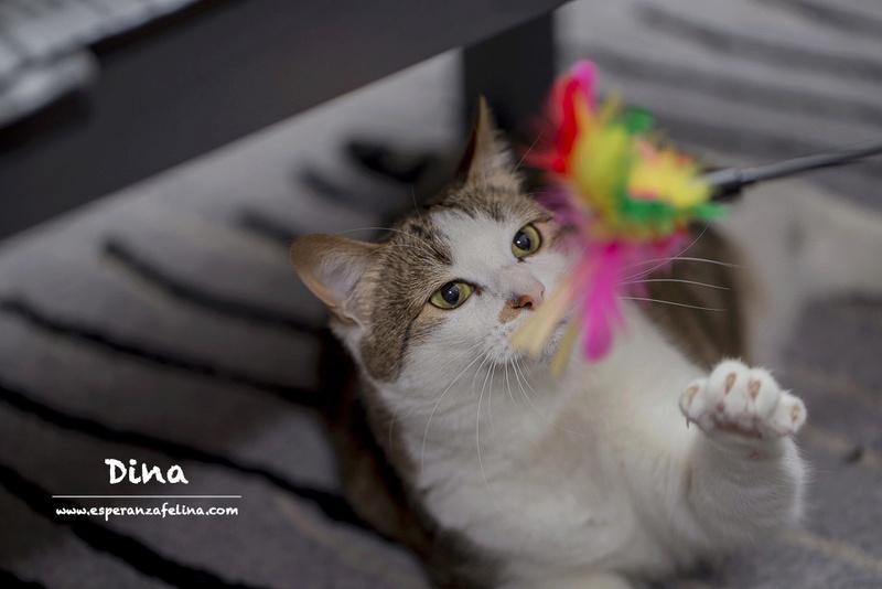 Dina, preciosa gata busca su hogar (Álava, fecha de nacimiento aproximada 10/04/2014 ) Dina11