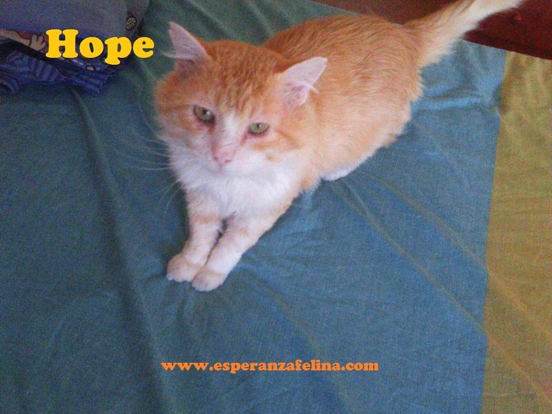Hope, precioso rubio en adopción. + Inmuno.  (Álava) F.N.: 01-01-2003  Hope210
