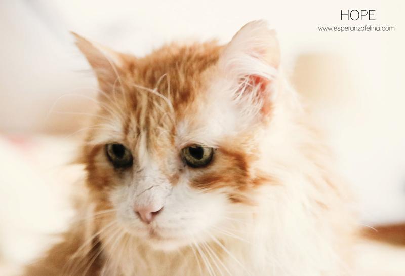 Hope, precioso rubio en adopción. + Inmuno.  (Álava) F.N.: 01-01-2003  Hope_012