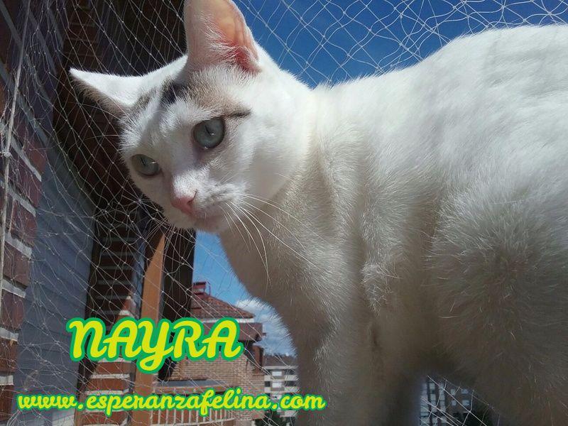 Nayra, gatita de ojos cautivadores en adopción. Alava (Fecha Nac. aprox: 11-08-2015) Ilh4ye10