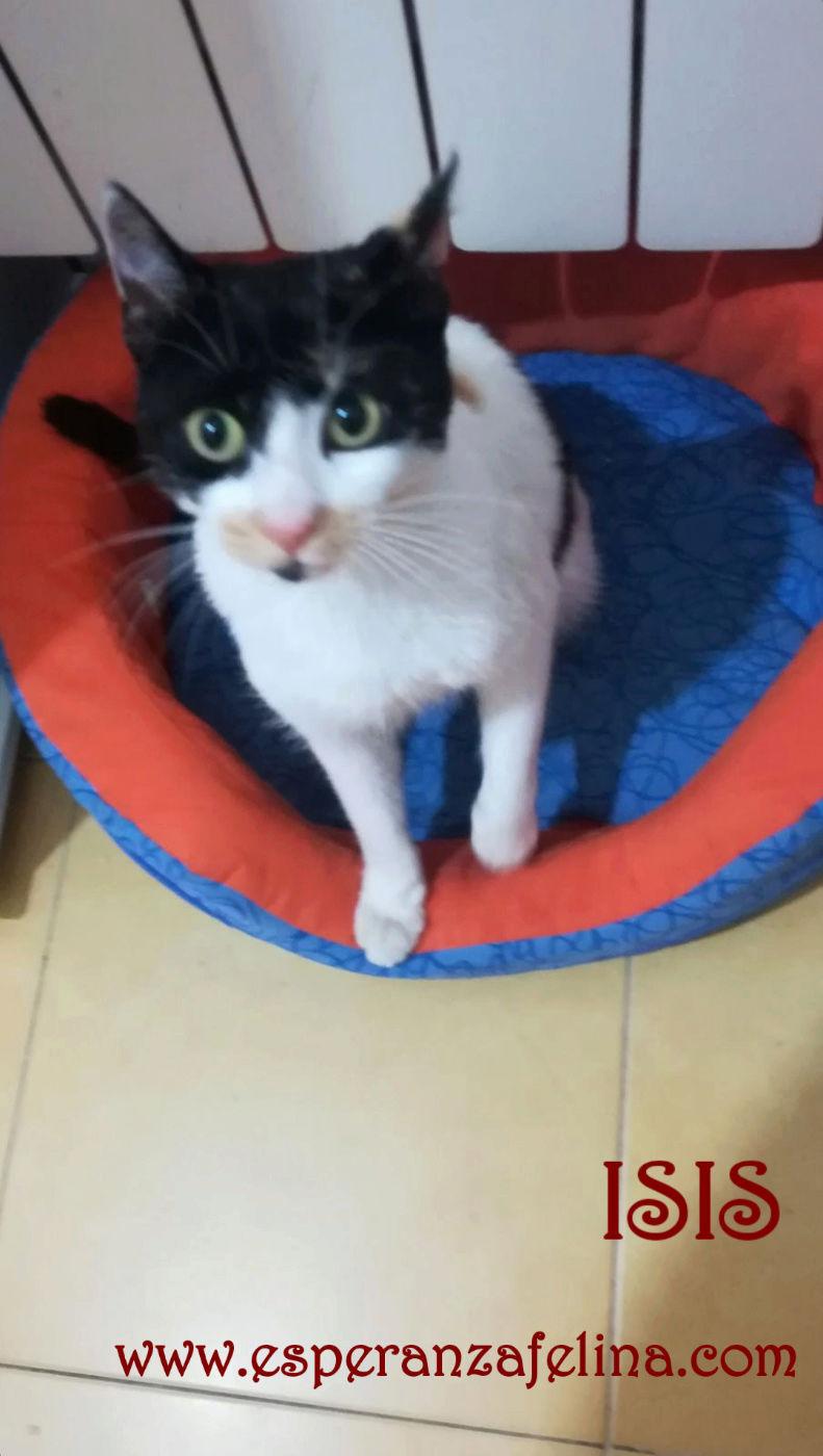 Isis preciosa gatita tricolor en adopción. (FN: 01/03/17) Img_2010