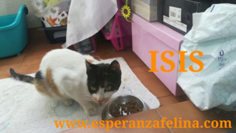 Isis preciosa gatita tricolor en adopción. (FN: 01/03/17) Img_2011
