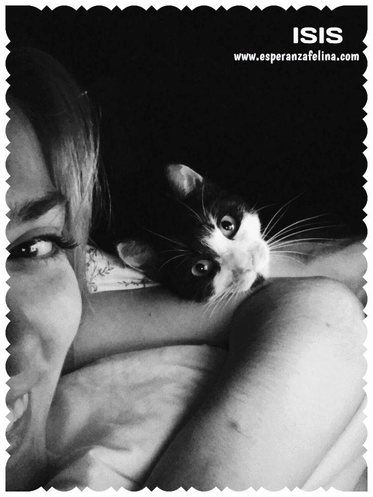 Isis preciosa gatita tricolor en adopción. (FN: 01/03/17) Isis_e18