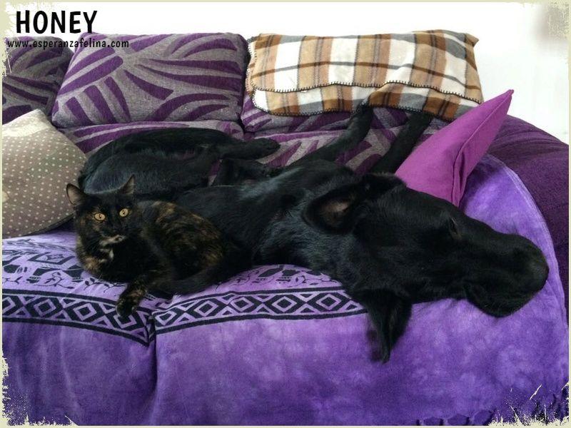 Honey, dulce gatita carey busca hogar. (FN: 10/09/15) Álava.  Levqyq10
