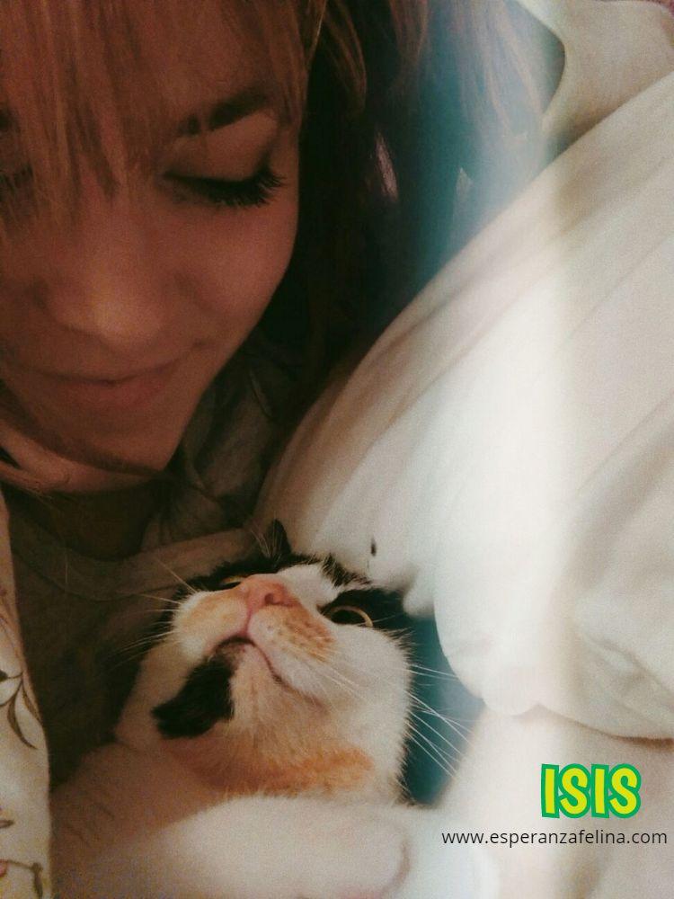 Isis preciosa gatita tricolor en adopción. (FN: 01/03/17) Lyhuhj10