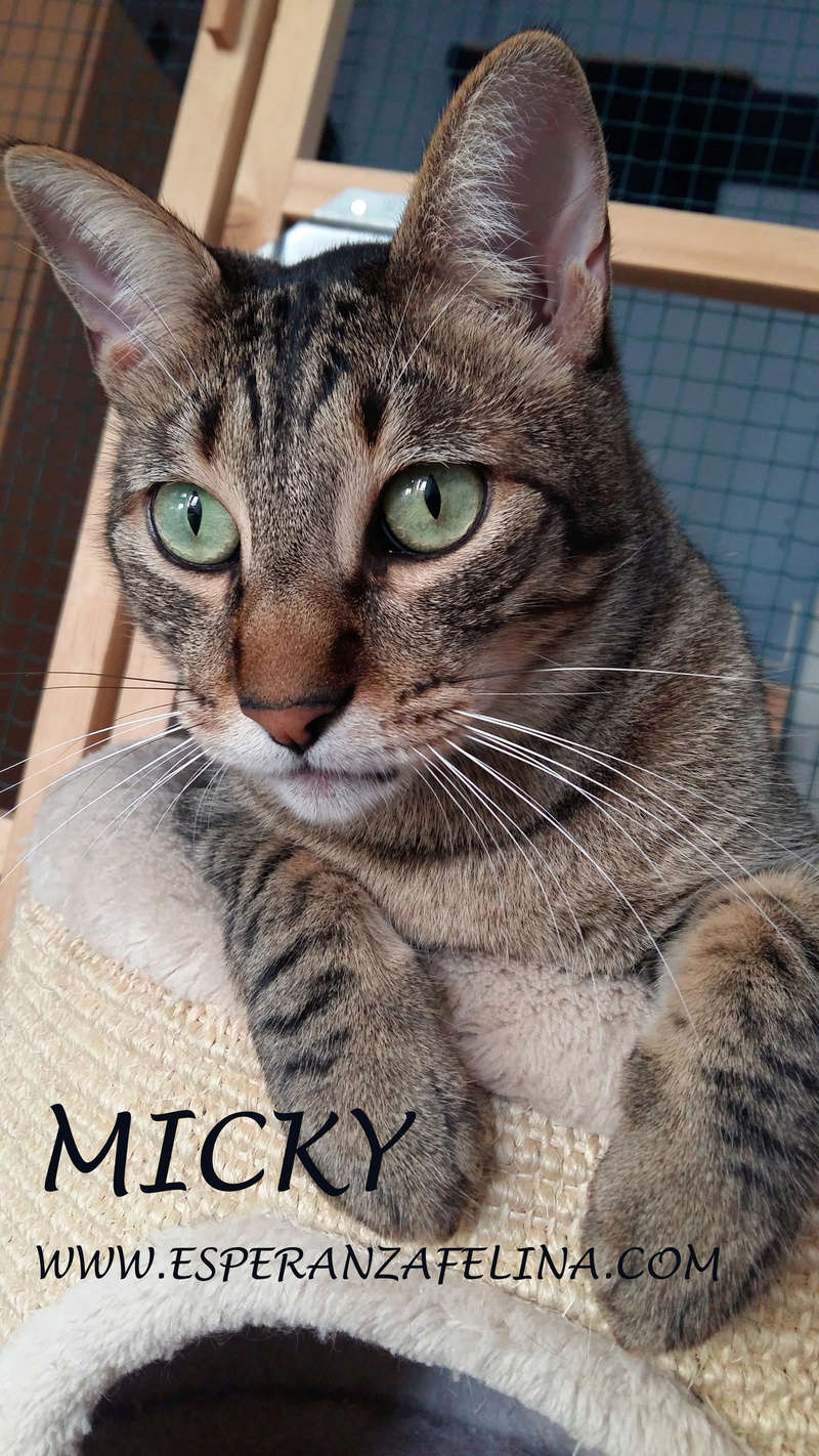 Micky y Canica, dos amores en adopción. (FN.Abril 2015) Álava Micky11