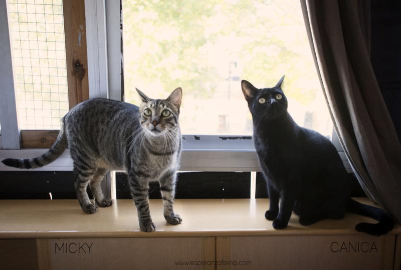 Micky y Canica, dos amores en adopción. (FN.Abril 2015) Álava Micky_10