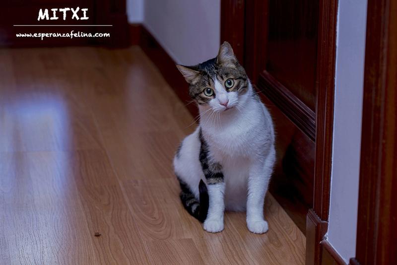 Mitxi, precioso gatito blanco y atigrado (Álava, FECHA DE NACIMIENTO APROX: 1/10/12)  Mitxi_10