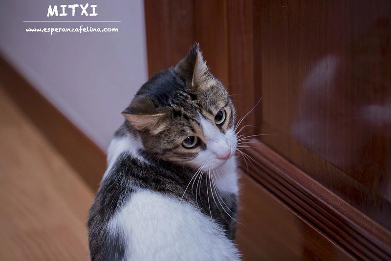 Mitxi, precioso gatito blanco y atigrado (Álava, FECHA DE NACIMIENTO APROX: 1/10/12)  Mitxi_11