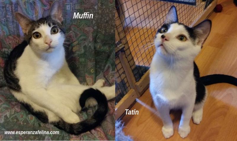*Muffin y Tatín (Pastelitos). Cachorritos supermimosos buscan familia. Álava (F.N. aprox: 12/05/2018) Muffin10