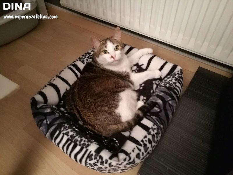 Dina, preciosa gata busca su hogar (Álava, fecha de nacimiento aproximada 10/04/2014 ) Nwaszz10