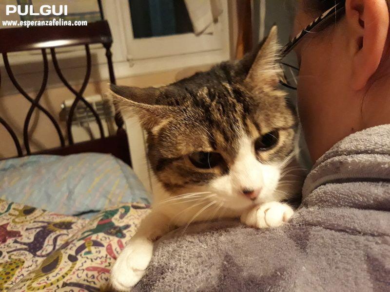 Pulguita, preciosa y mimosa gatita busca hogar. (F.N: 15/05/2012) (Positiva a inmuno + Leucemia) Álava. Nzomll10
