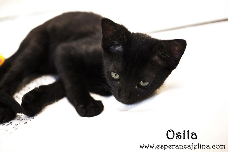 Osita, preciosa pantera en adopción. Álava (Fecha nacimiento: 05-04-17) ¡Adoptada! Osita110