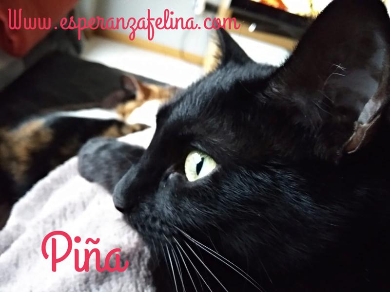 Piña y Piñón, parejita de negruchis en adopción (Alava, Fecha de nacimiento aprox.: 06/09/2017) Piya13