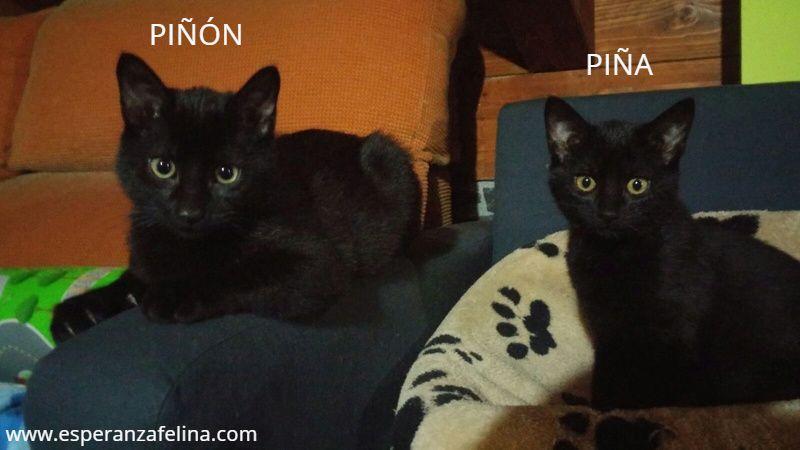 Piña y Piñón, parejita de negruchis en adopción (Alava, Fecha de nacimiento aprox.: 06/09/2017) Q5bbar10