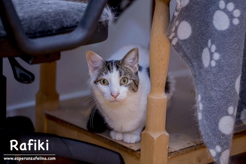 Simba y Rafiki, pareja muy especial en adopción. Alava (FN:15/09/15 ; 15/09/09) Rafiki19