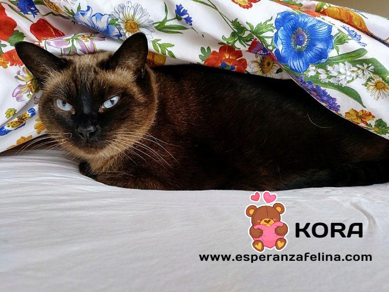 Kora, gata siamesa busca hogar, Álava (Fecha aprox. nacimiento 5/11) - Página 3 Rmwrvz10
