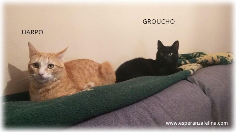Harpo y Groucho, preciosa pareja en adopcion. Alava (FN:20/10/14) Rqqfji10