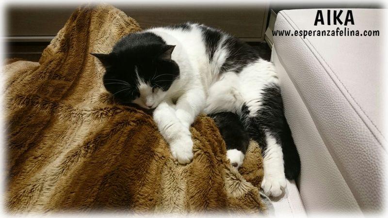 Aika, preciosa vaquita en adopción. (F.N: 01/01/12) Álava. Tcisyz10