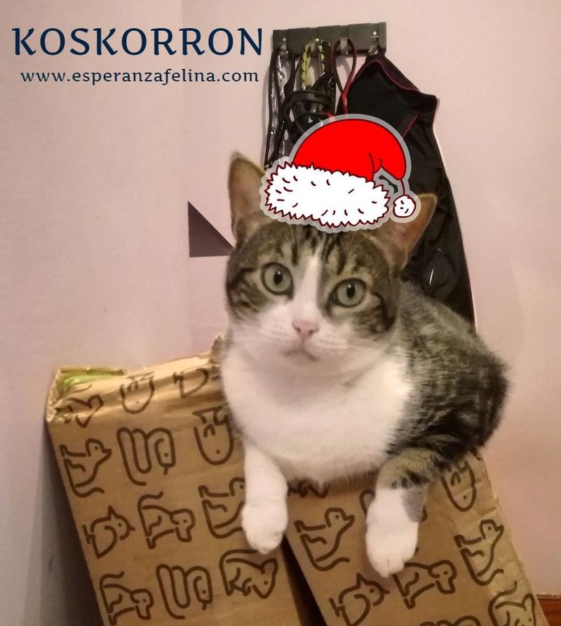 Koskorron, peluche en adopción +INMUNO ( Alava) ( F.N.aprox. 01/15) Vphpsp10