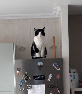 Gato perdido en culleredo 20180111