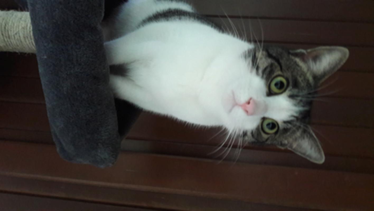 Gato encontrado en Oleiros 20180112