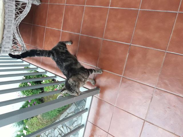 Gato peedido en Fontan 20180510