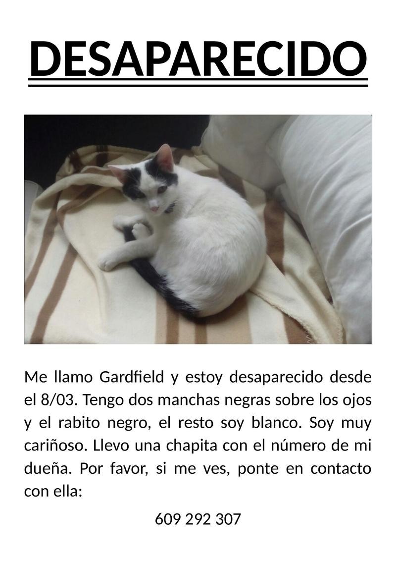 Gato perdido en Vilarmaior. Apareció! 309510