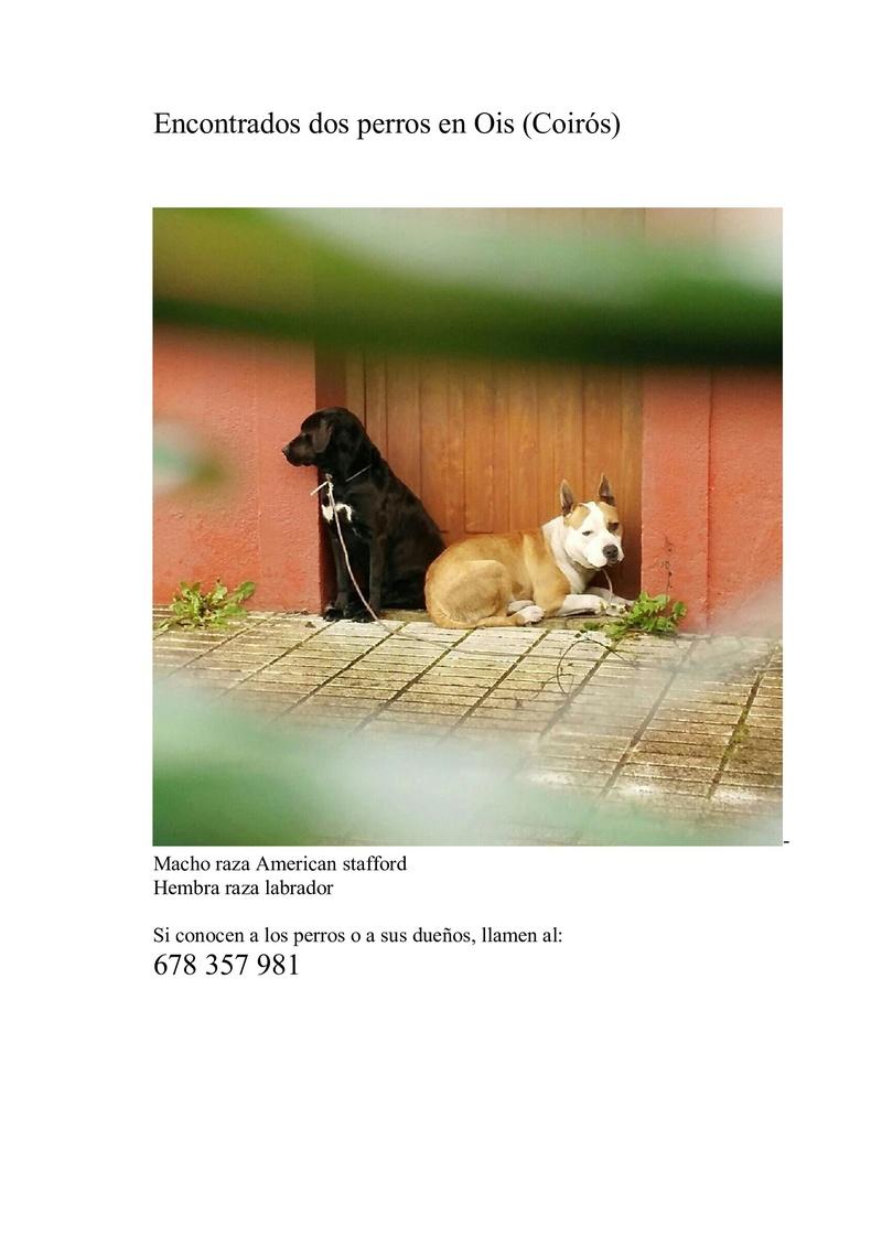 Perros encontrados en Ois- Coiros 322610