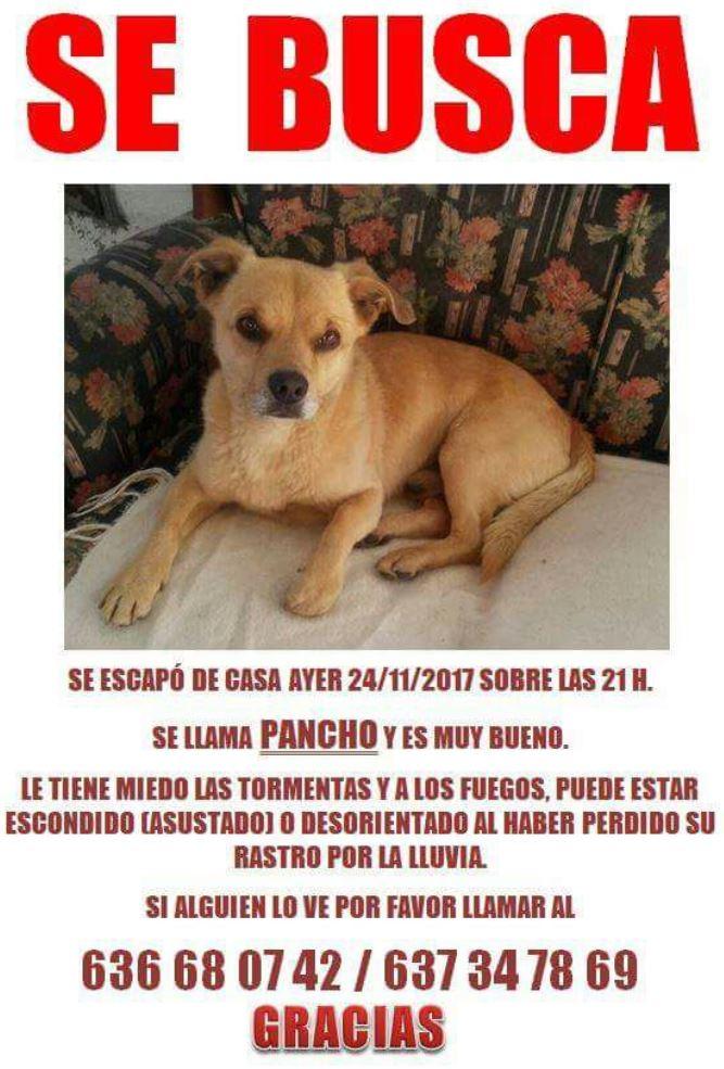 Perro perdido en Lorbe Cartel13