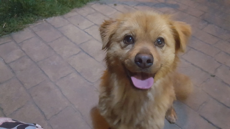 Perro encontrado en Feans Gomino10