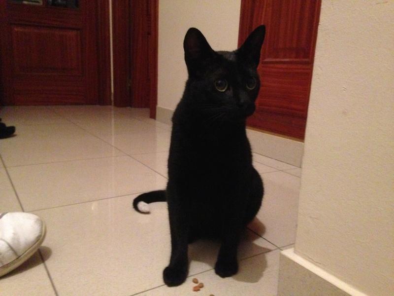 Gato encontrado calle San Andres Image110