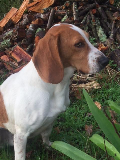 Perro encontrado en Oza- Cesuras Image114