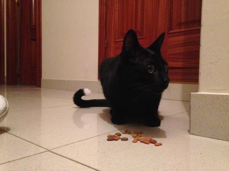 Gato encontrado calle San Andres Image211