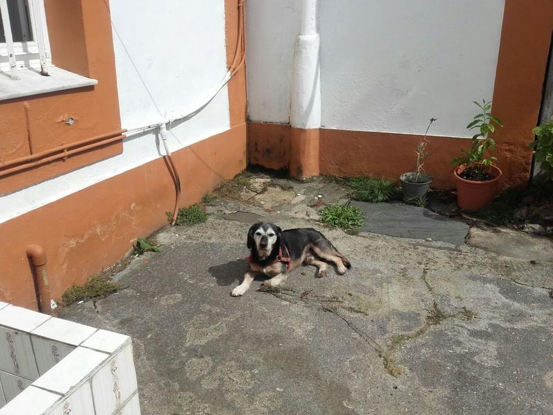 Perro perdido en Paderne Img-2018