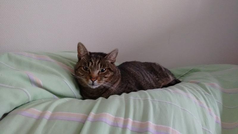 Léto, gentil chat mâle type européen, tigré, né en juin 2015 Img_2011