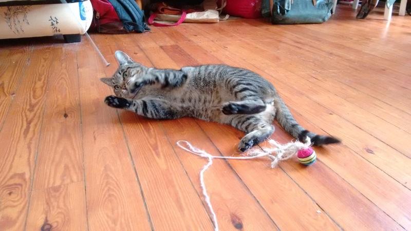 Léto, gentil chat mâle type européen, tigré, né en juin 2015 Img_2012