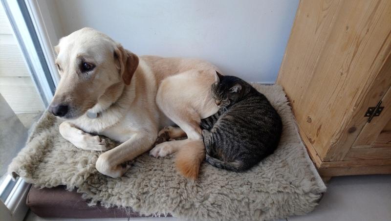 Léto, gentil chat mâle type européen, tigré, né en juin 2015 Mms_im10