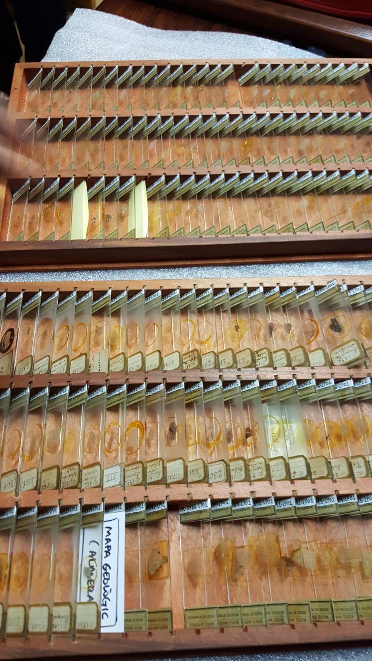 Crònica de la conferència: Formes actuals de documentació, catalogació i conservació preventiva de les col•leccions de mineralogia i petrologia al Museu de Ciències Naturals de Barcelona 1112