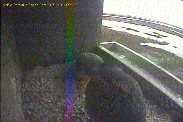 Diverse cams USA. 03122014