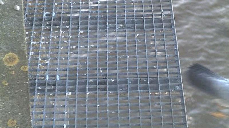 Aalsmeer/Watertoren. Youngster en Sidonia - Pagina 5 1602aa16