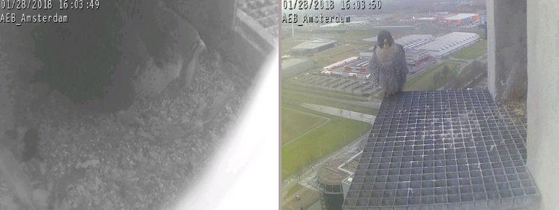 Amsterdam AEB. V. 2FC (Bochum-Wiemelhausen 2014) ~ M. LL (A'dam Hemweg 2014) - Pagina 5 2801ae10