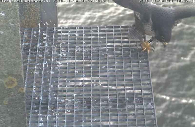 Aalsmeer/Watertoren. Youngster en Sidonia 3011aa10