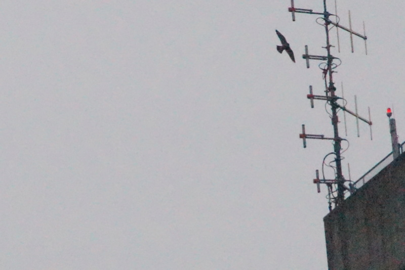 Rond om de toren 91310